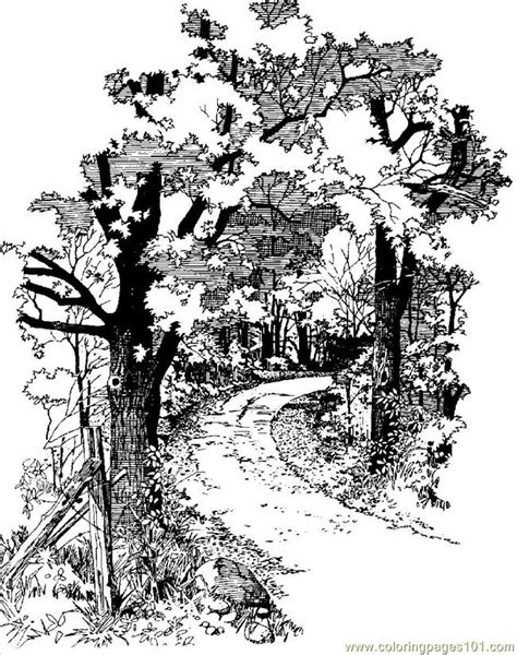 dirt road coloring page  forest coloring pages