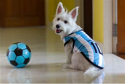 Fifa Argentina Dogs Cup Football Catch Pets