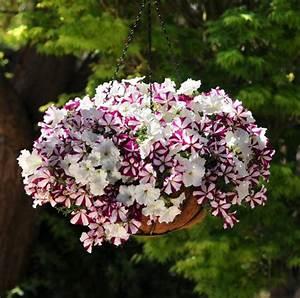 Blumen Für Südbalkon : balkonbepflanzung ideen pflanzen f r jede himmelsrichtung ~ Watch28wear.com Haus und Dekorationen