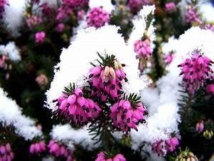 Fleur D Hiver Pour Jardinière : balcons jardini res hiver tout ~ Dailycaller-alerts.com Idées de Décoration