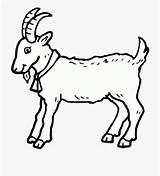 Goat Coloring Clipart Goats Colorare Disegno Capra Capretta Drawing Disegnidacolorareonline Animal Bambini Completare Caprette Cliparts sketch template