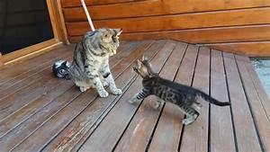 Laver Un Chaton : une chatte lave son chaton de force ~ Nature-et-papiers.com Idées de Décoration