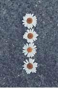 daisy flowers iphone w...Vintage Flowers Tumblr