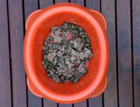 hundefutter test trockenfutter  nassfutter