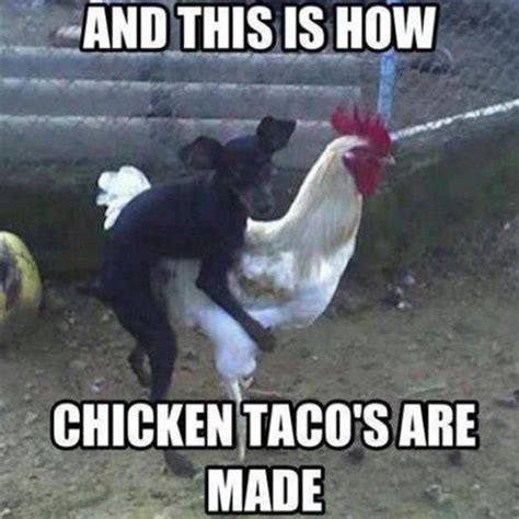Funny Chicken Memes - chicken tacos funny pinterest