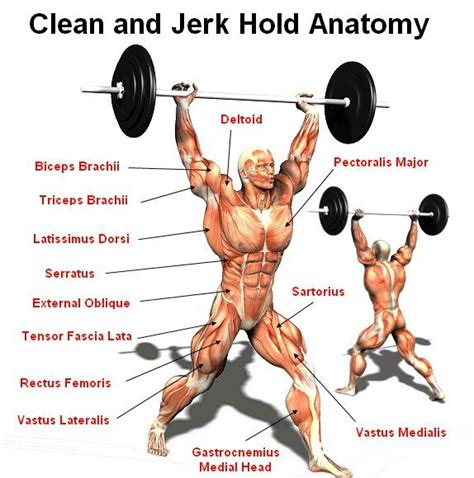 jerk clean anatomy muscles lifting olympic muscle weightlifting exercise weight crossfit body during bodybuilding exercises diagram power showing fitness training