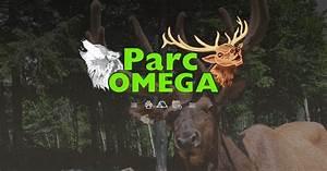 maison du parc restaurant et boutique souvenirs parc omega With maison en bois quebec 18 renard arctique parc omega