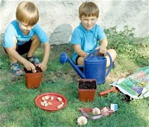 Cultiver De L Ail : l 39 ail la saveur facile cultiver ~ Melissatoandfro.com Idées de Décoration