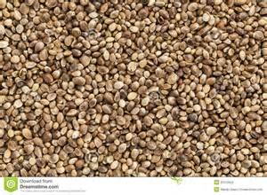seed cards 大麻籽 免版税库存图片 图片 31510629
