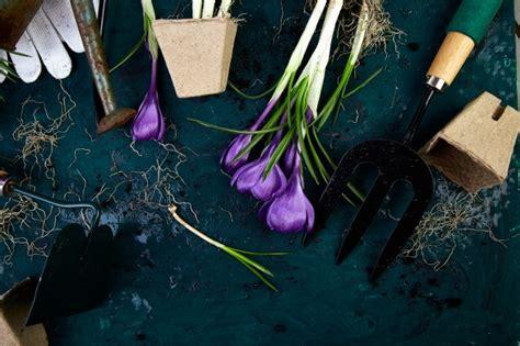 foto vasi di fiori vasi di fiori foto e vettori gratis