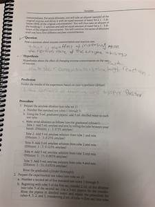 Solved  Biology 1113 Lab 4  Enzymes Reading  Lab Manual Pp