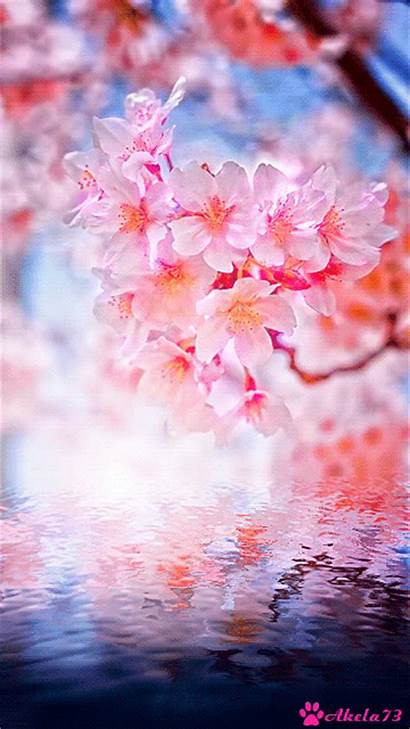 Flower Gifs Animated Passion Anime Cherry Blossom