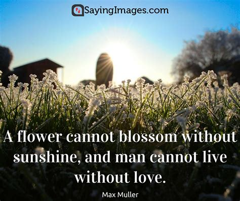 42 Beautiful Flower Quotes  Sayingimagesm. Strong Cowgirl Quotes. God Quotes In Hard Times. Trust Quotes Hal Hartley. Inspirational Quotes Cards. Positive Quotes Education Success. Adventure Quotes From Disney Movies. Morning Emotional Quotes. God Rap Quotes
