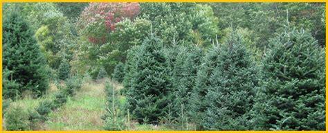 best nc christmas tree farm cornett and deal tree farm nc tree farms