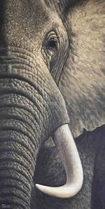 elephant paintings - Google Search | elephant side tattoo ...