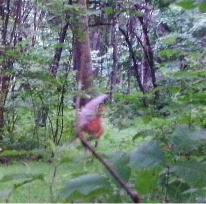 Trail Cam Gnome Caught Pa Effect Taken