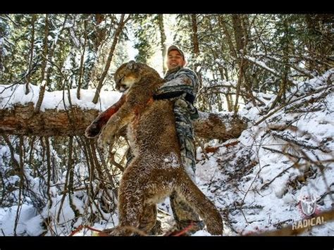archery mountain lion hunt   cougar youtube