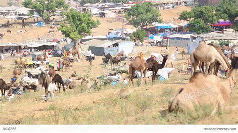 Pushkar Camel Festival Background by Pushkar Camel Fair Stock Footage 8407666