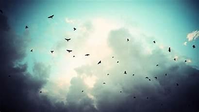 Sky Birds Clouds Background Desktop Wallpapers Px