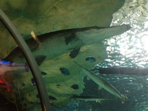 aquarium picture of sea minnesota bloomington tripadvisor