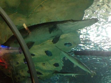 sea minnesota aquarium aquarium picture of sea minnesota bloomington tripadvisor