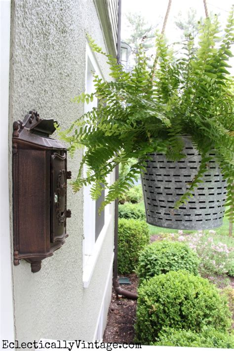 ferns in planters classic porch ferns