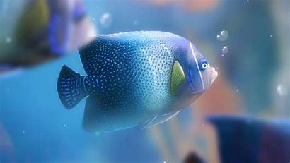 Fish Fishes Wallpapers Desktop Abyss Background Widescreen