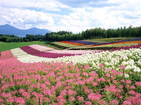 landscape flower garden deanne morrison flower garden background