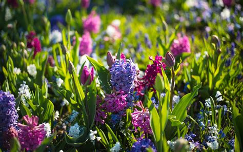Spring Flower Wallpaper (73+ Images