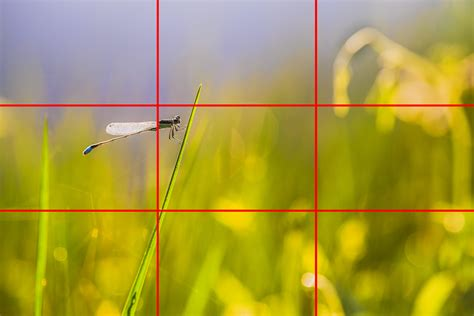 what is the rule of thirds the myth of the rule of thirds