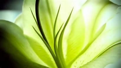 Nature Widescreen Wallpapers Pflanzen Macro Desktop 1080