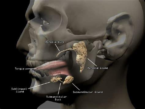 Mucocele (speekselkliercyste) en ranula mondbodem