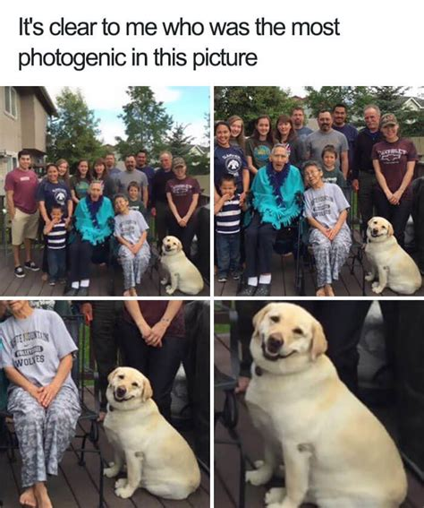 Adorable Dog Memes That Will Make Your Day