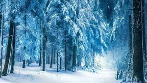 nature, Winter, Snow, Landscape, Trees, Forest, Frost ...