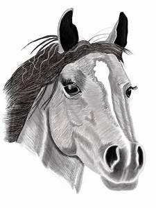 Pferdekopf Schwarz Weiß : pferd pferde tiere wei schwarz wei von a kahraman bei kunstnet ~ Watch28wear.com Haus und Dekorationen