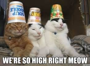 high cat high cats weknowmemes