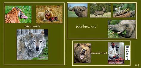 The Patient Ox Carnivores => Herbivores