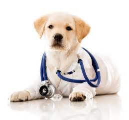 the animal clinic welcome veterinarian pet vet clinic in marietta ga