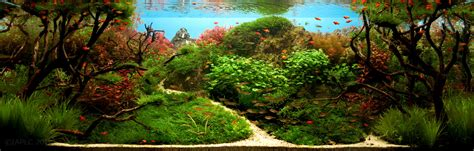 Aquascape Freshwater Aquarium by The Top 10 Most Beautiful Freshwater Aquascapes Of 2012