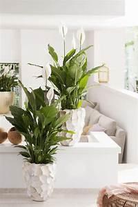 Zimmerpflanzen Für Wenig Licht : 10 zimmerpflanzen die wenig licht brauchen wohnzimmer ~ A.2002-acura-tl-radio.info Haus und Dekorationen