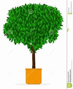 Arbre D Intérieur : arbre d 39 int rieur ext rieur ficus dans le bac photo libre de droits image 14794165 ~ Preciouscoupons.com Idées de Décoration