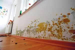 Schimmel In Der Dusche Entfernen : schimmel in der wohnung entfernen so bek mpfst du schimmelpilz ~ Buech-reservation.com Haus und Dekorationen