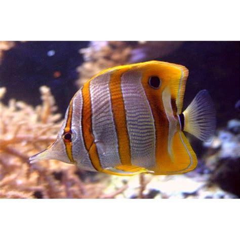 understanding  fauna   pacific ocean
