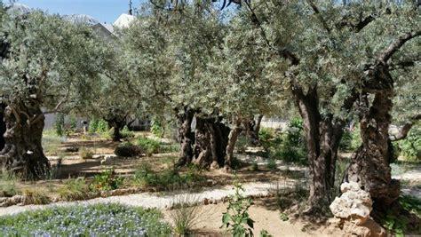 garden of gethsemane tour of israel 15 gethsemane