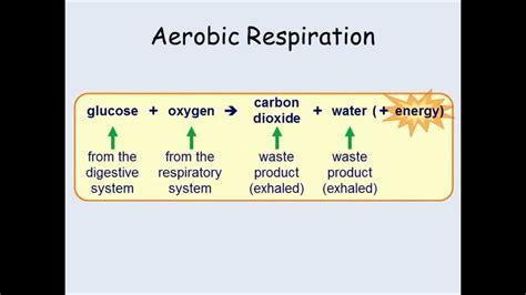 easy respiration worksheet ks3 goodsnyc