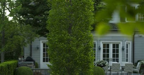 doyle herman design associates doyle herman design associates landscape design gardens pinterest landscape designs