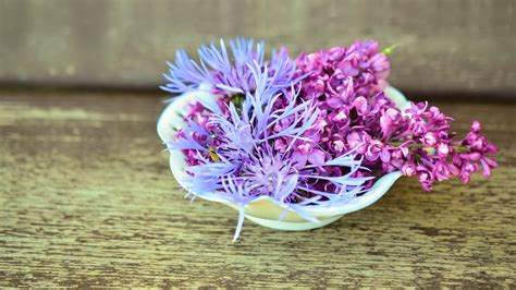 cornflower lilac flower purple hd wallpaper wallpapersbyte