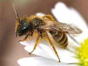 Wie Vertreibe Ich Wespen : was haltet ihr von wespen seite 9 allmystery ~ Orissabook.com Haus und Dekorationen
