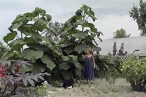 Arbre à Croissance Rapide Pour Ombre : l 39 arbre magique pierre gingras jardiner ~ Premium-room.com Idées de Décoration