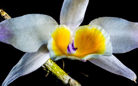 รูปภาพ : ปลูก, กลีบดอกไม้, เบ่งบาน, สีเหลือง, ตา, การถ่าย ...